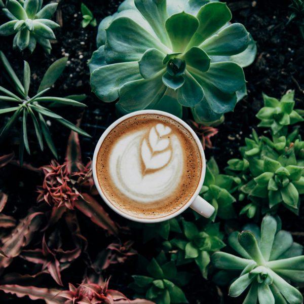 Plante_coffee_shop_rennes